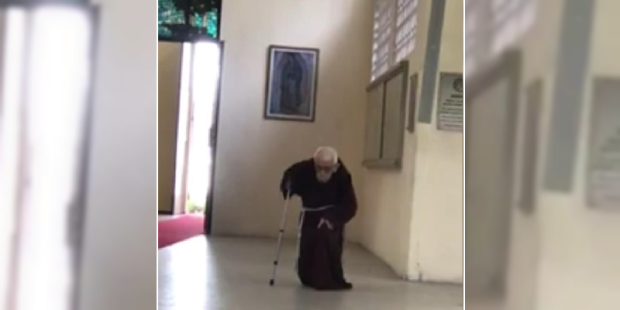 At 98, this Brazilian Capuchin has become a sensation on social media
