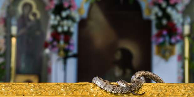 Why snakes on a Greek island venerate the Virgin Mary on August 15