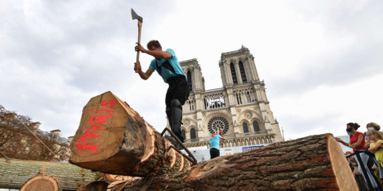 Notre Dame's spire will need over 1,000 oak trees to rebuild